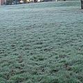地上有一層frost了