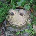 發現可愛的青蛙