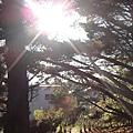 喜歡從樹梢間看太陽