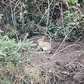 遇到兔子!!!