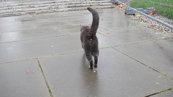 Cathedral前面遇到貓