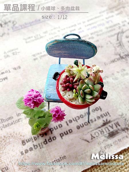 小繡球、多肉盆栽拷貝fb.jpg