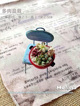 多肉盆栽拷貝fb.jpg