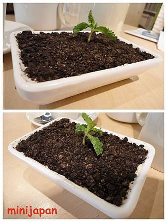 維圖思咖啡~提拉米蘇小植栽.jpg