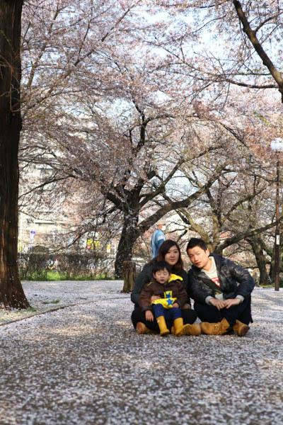 深谷櫻花-10