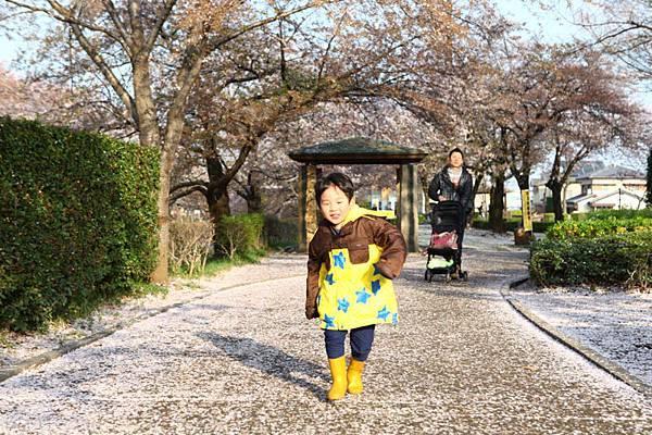 深谷櫻花-22
