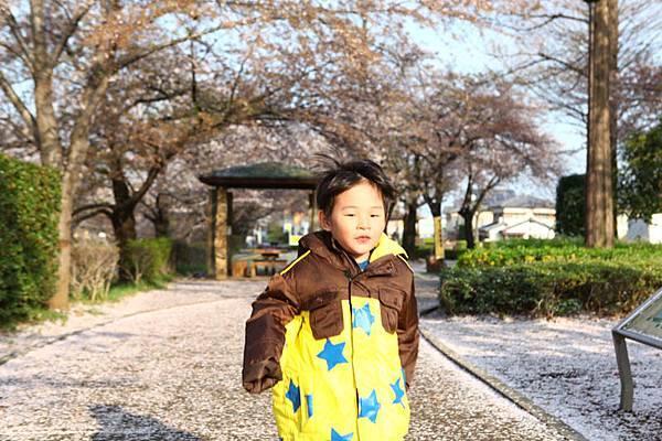 深谷櫻花-24