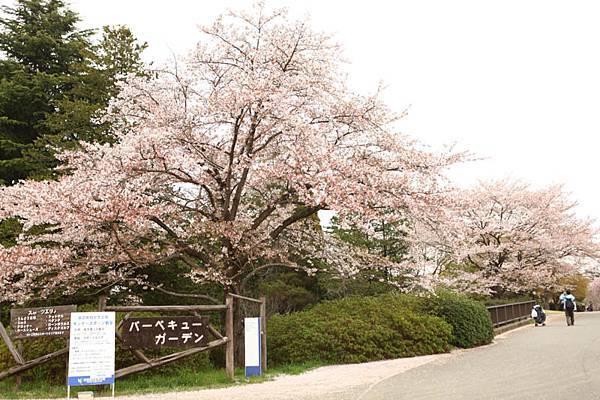 昭和公園賞櫻-15.jpg