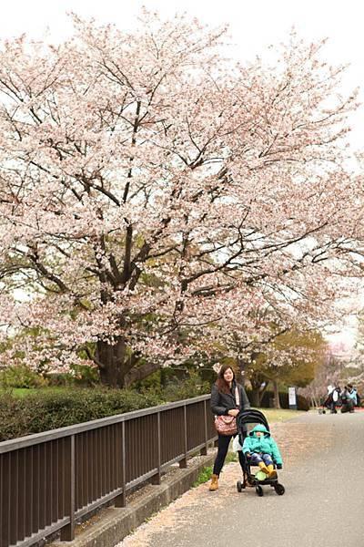 昭和公園賞櫻-17.jpg