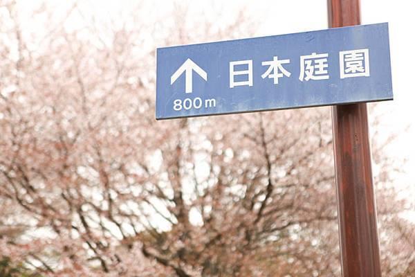 昭和公園賞櫻-28.jpg