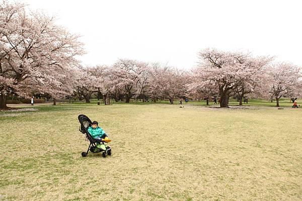 昭和公園賞櫻-50.jpg