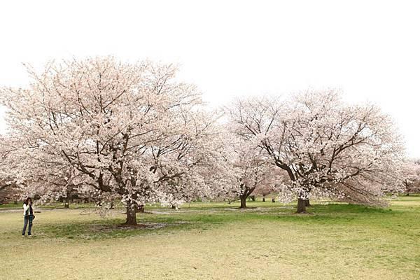 昭和公園賞櫻-53.jpg