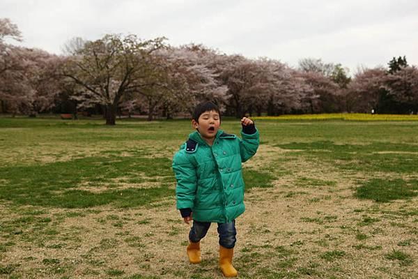 昭和公園賞櫻-99.jpg