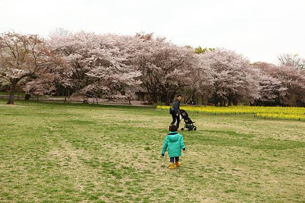 昭和公園賞櫻-108.jpg