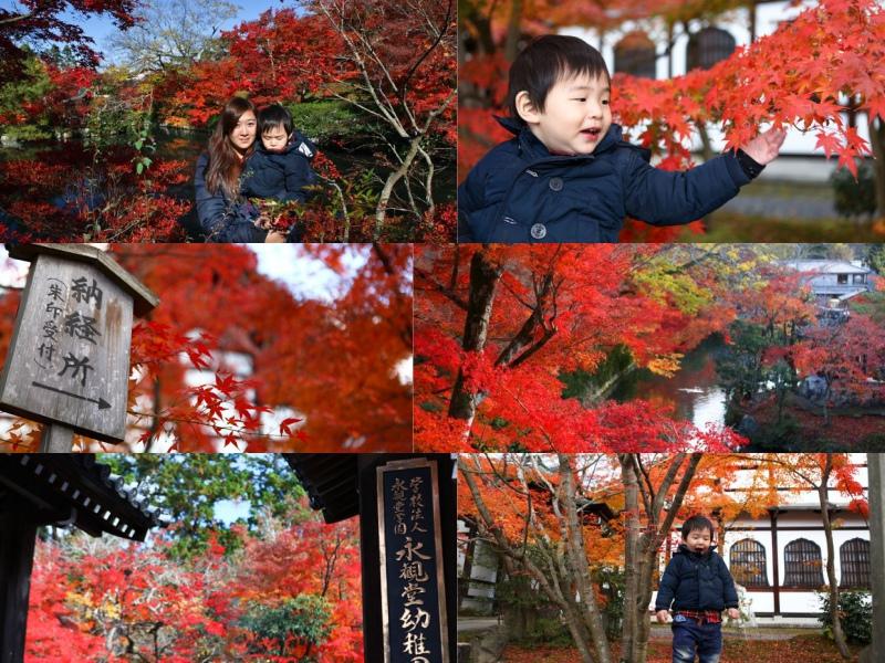 collage永觀堂