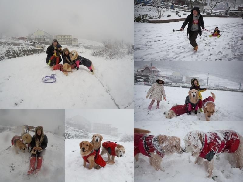 collage雪