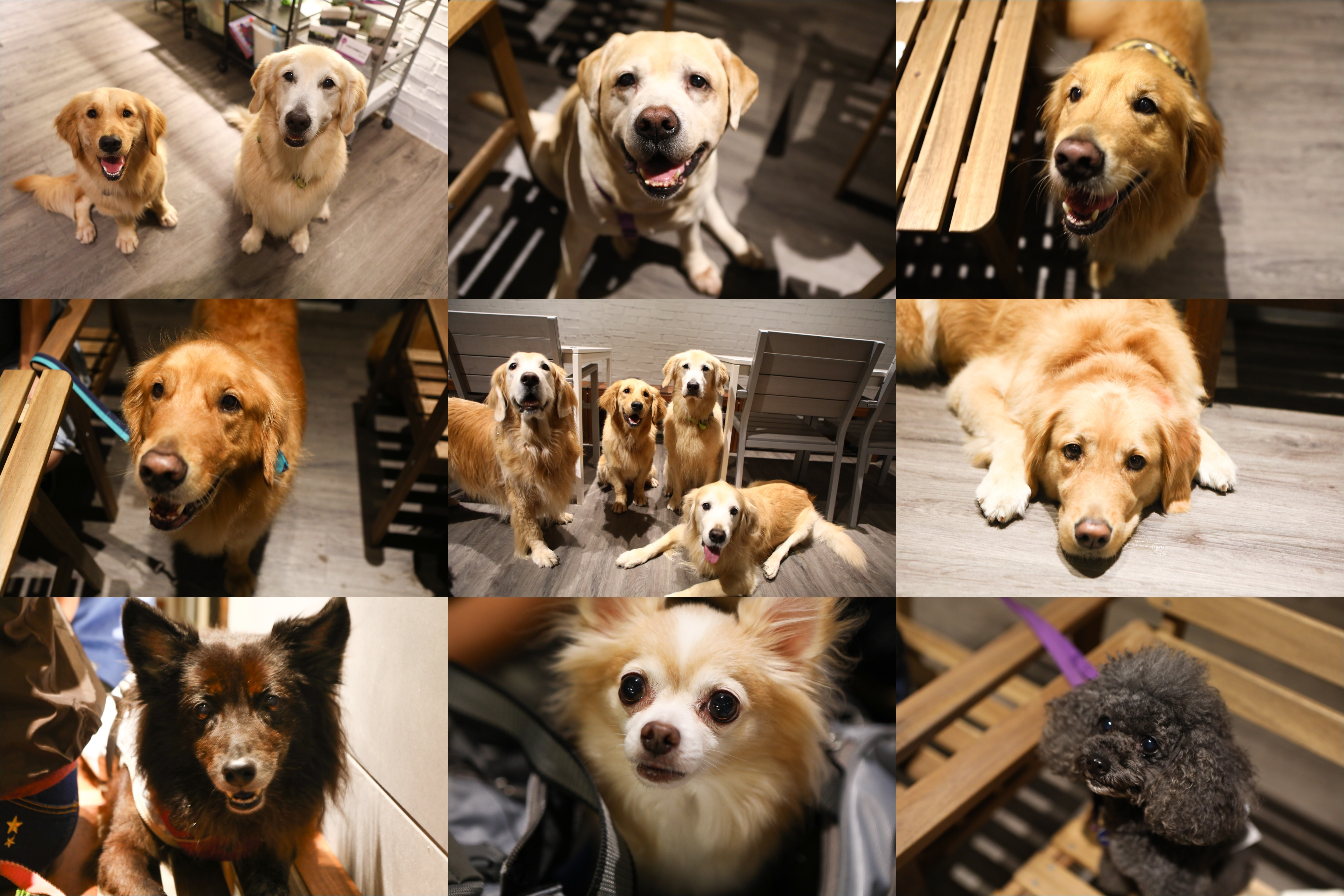 寵愛月台狗狗-tile