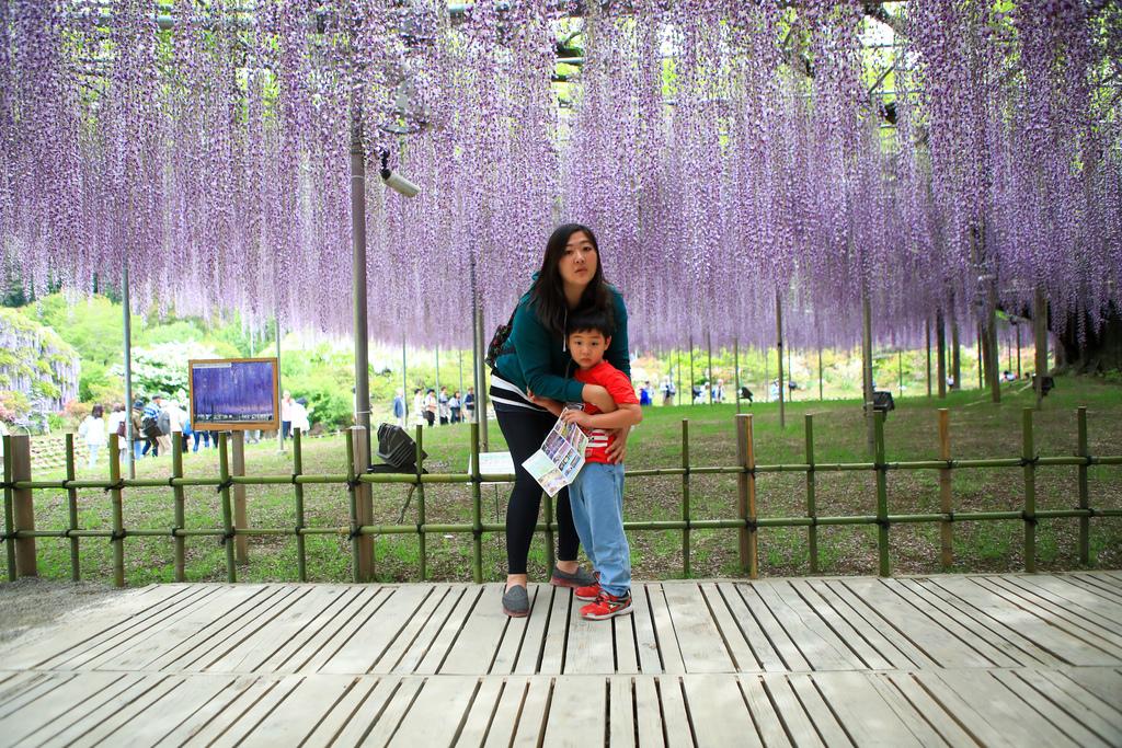 紫藤-5.jpg