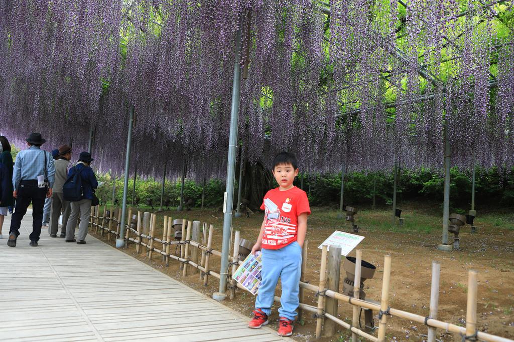 紫藤-14.jpg