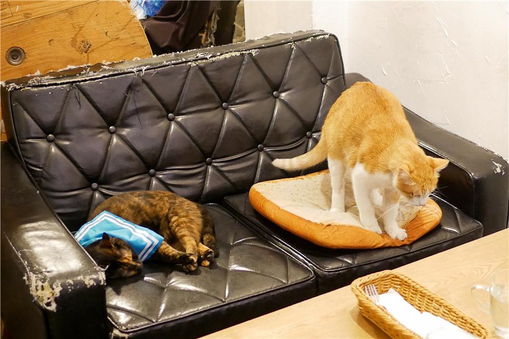 Toast Chat 不限時咖啡廳 美味義式燉飯  貓咪餐廳蒐集|台北東區|捷運國父紀念館 (6).jpg