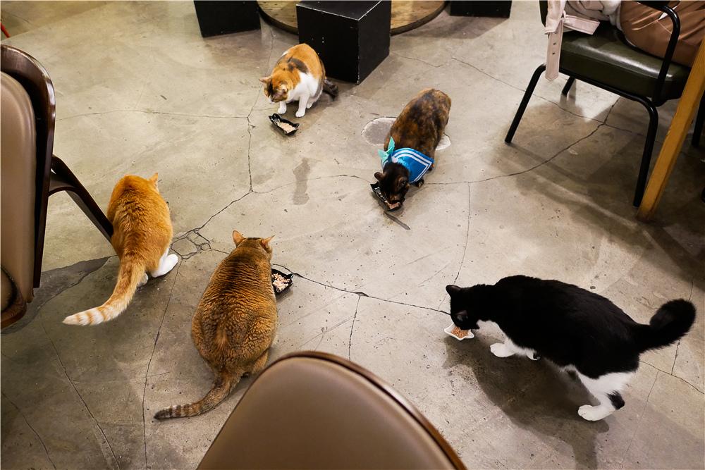 Toast Chat 不限時咖啡廳 美味義式燉飯  貓咪餐廳蒐集|台北東區|捷運國父紀念館 (9).jpg