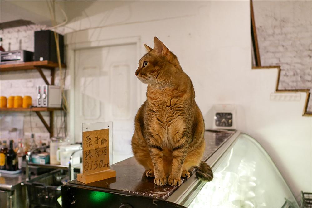 Toast Chat 不限時咖啡廳 美味義式燉飯  貓咪餐廳蒐集|台北東區|捷運國父紀念館 (7).jpg