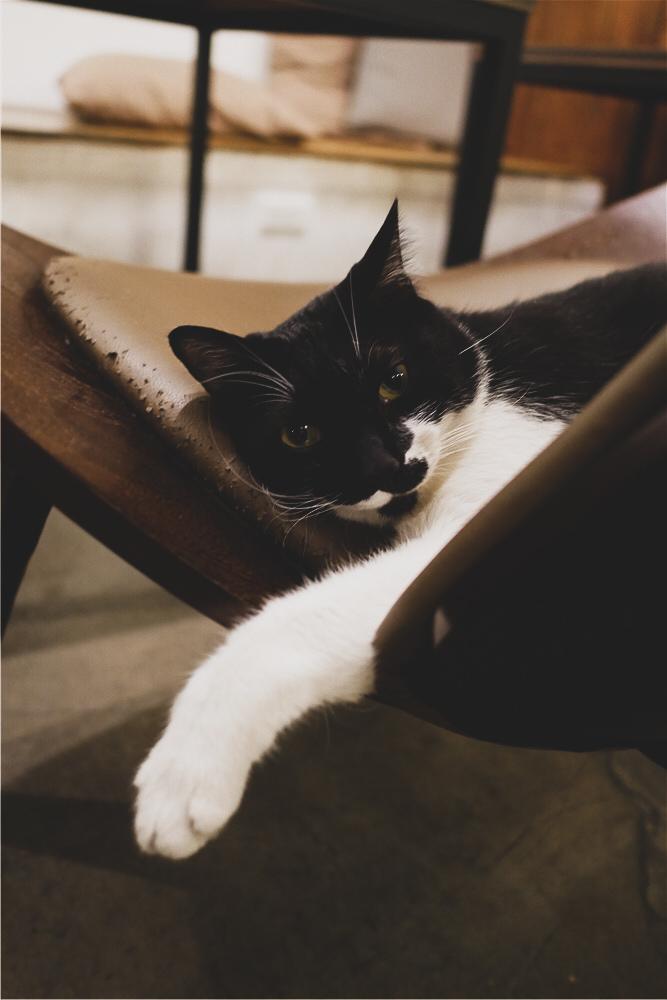 Toast Chat 不限時咖啡廳 美味義式燉飯  貓咪餐廳蒐集|台北東區|捷運國父紀念館 (36).jpg