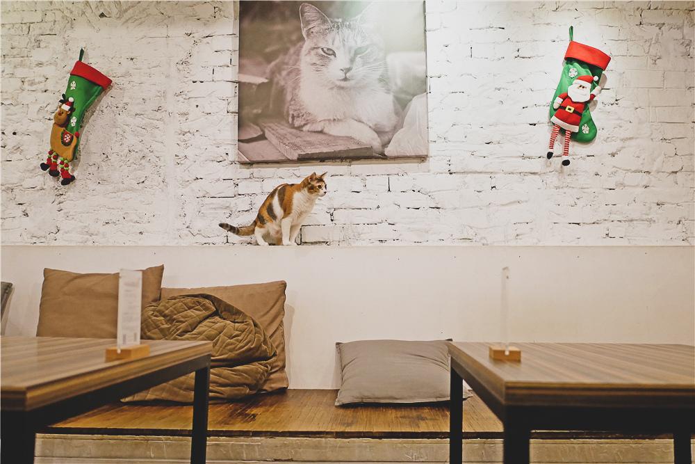 Toast Chat 不限時咖啡廳 美味義式燉飯  貓咪餐廳蒐集|台北東區|捷運國父紀念館 (37).jpg