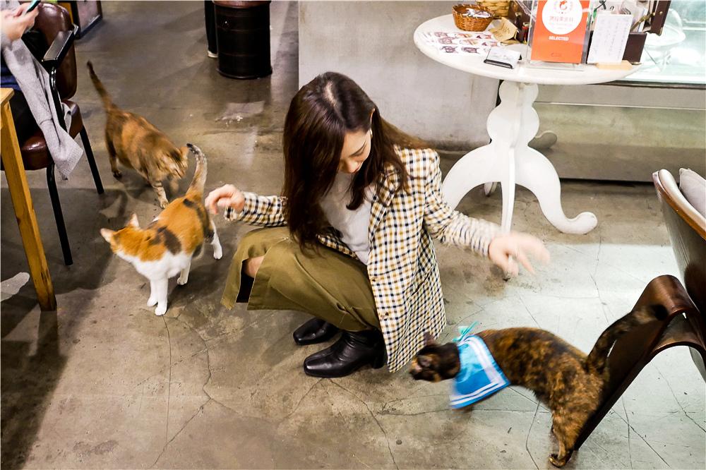 Toast Chat 不限時咖啡廳 美味義式燉飯  貓咪餐廳蒐集|台北東區|捷運國父紀念館 (46).jpg