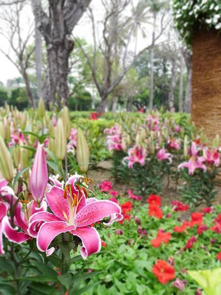 台南公園百花祭-2