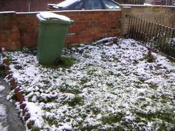 綠色草地白色雪.jpg