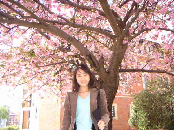 滿樹的花.jpg