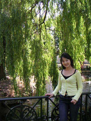 公園裡的柳樹