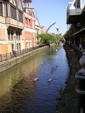 運河與天鵝