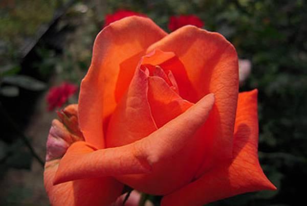 flowers_70_70