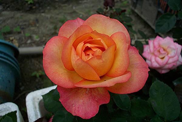 flowers_416_416