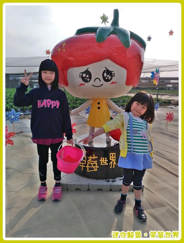 草莓04.jpg