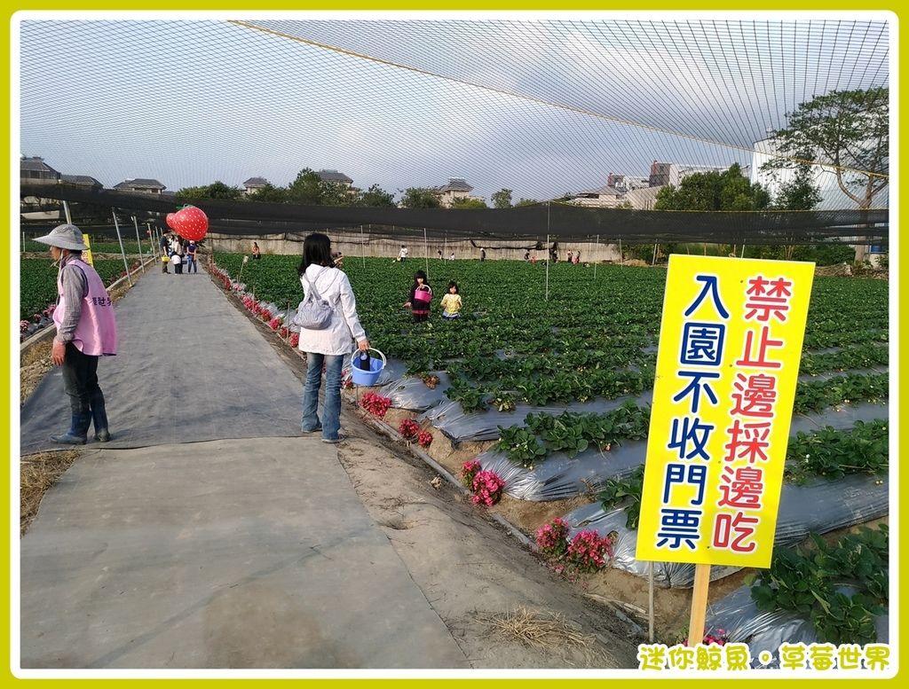 草莓10.jpg