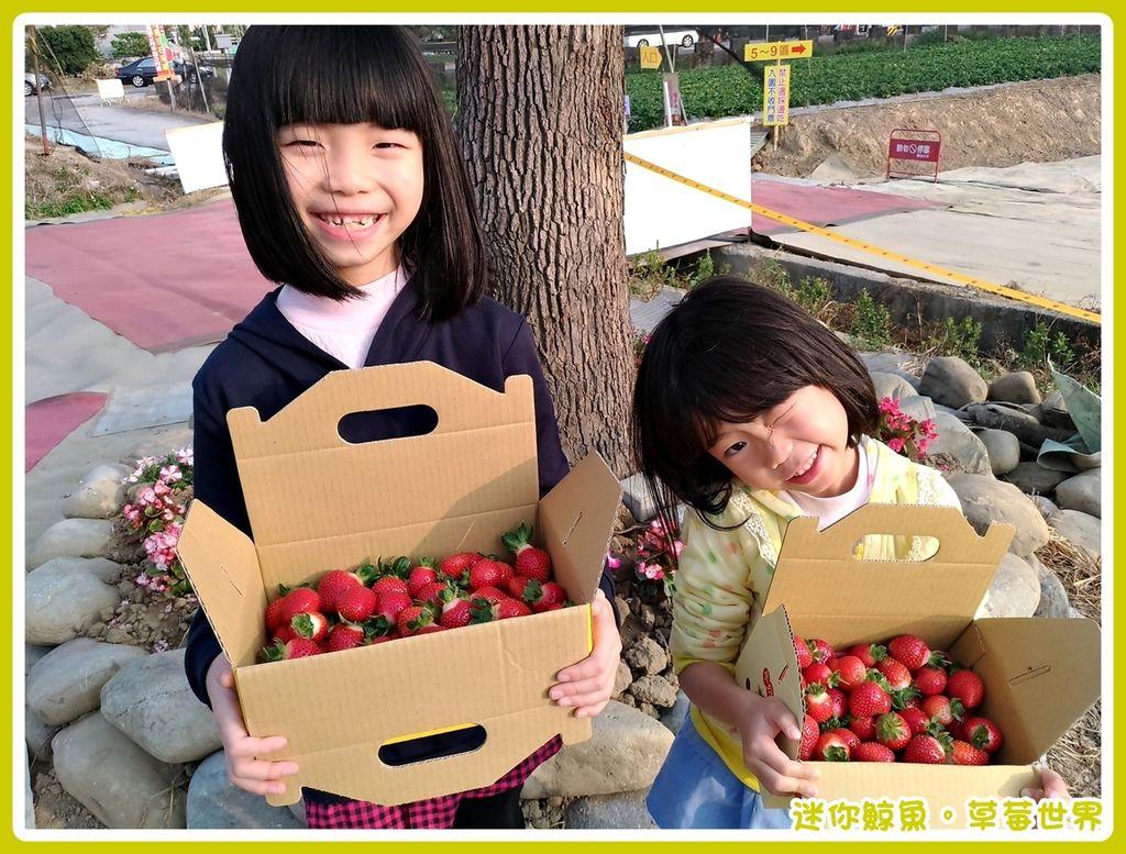 草莓23.jpg