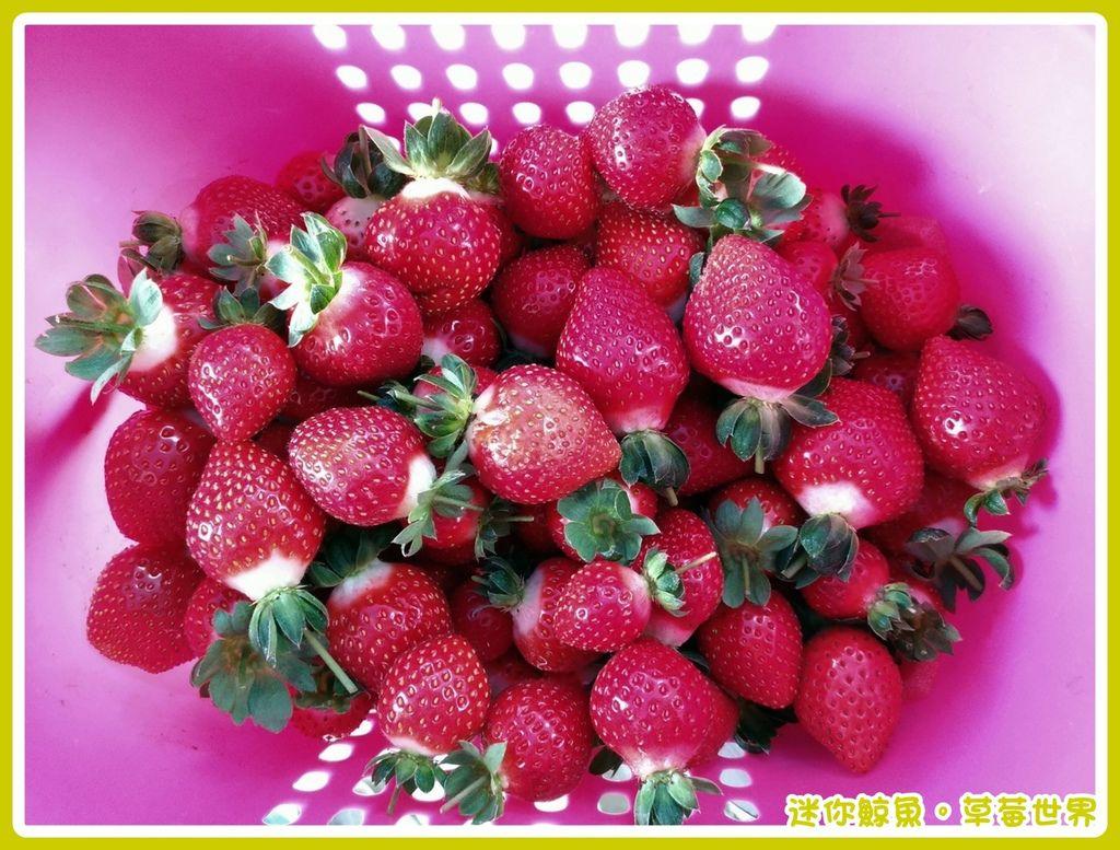 草莓21.jpg