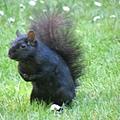 day1 (47)黑色的松鼠