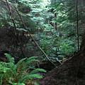 day2 (15)森林