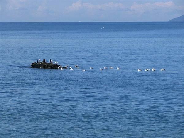 day2 (33)海鷗