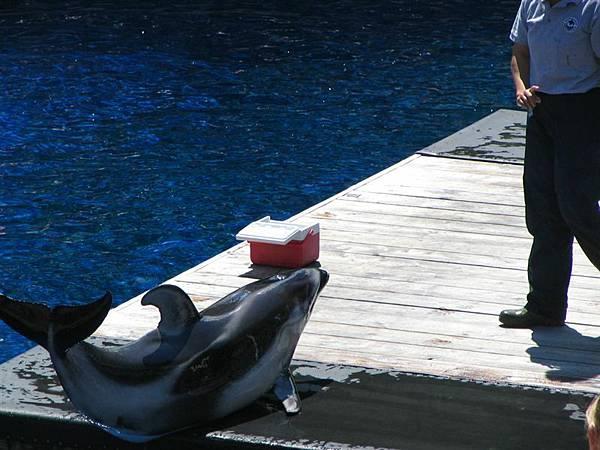 day2 (51)海豚