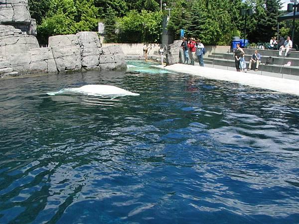 day2 (58)白鯨