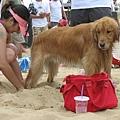 狗狗被埋進沙裡了