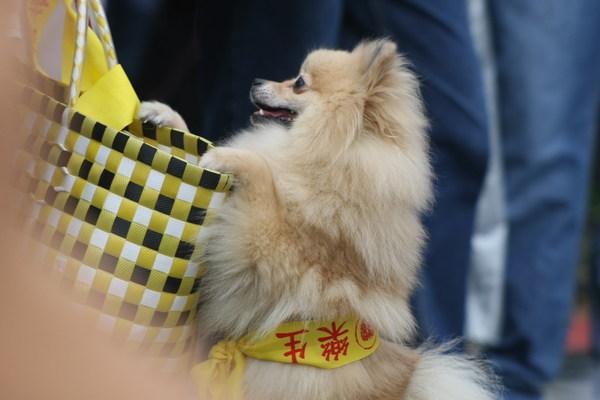 狗狗也挺樂生