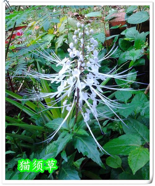 2012-06-09 11.00.07_副本