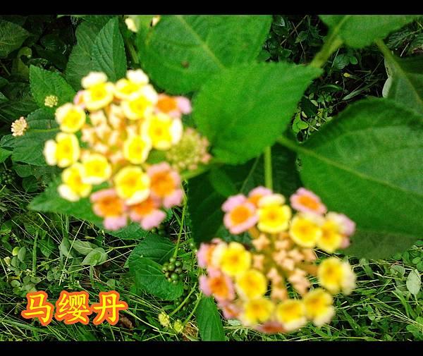 2012-06-09 11.10.47_副本