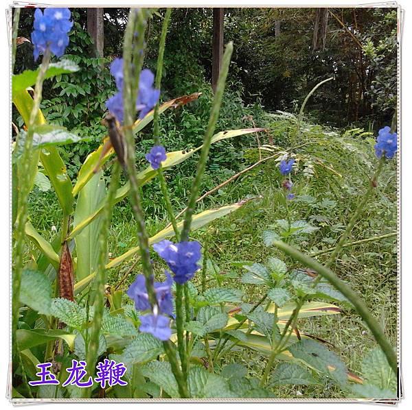 2012-06-09 11.11.51_副本